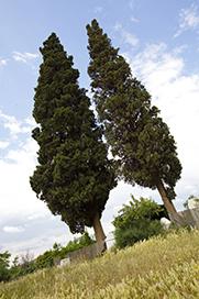11.- Gergal Cipreses.jpg