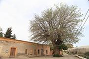20.- Rioja Olmo.JPG