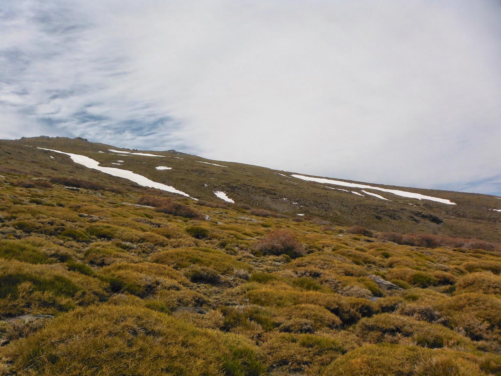 Vegetación almohadillada apenas pegada al suelo característica de la alta montaña mediterránea (desde los 2000 m de altura) © Fotografía: Juan Antonio Muñoz