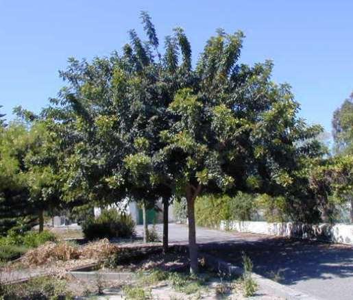 Diputaci n provincial de almer a for Arboles jardin hoja perenne